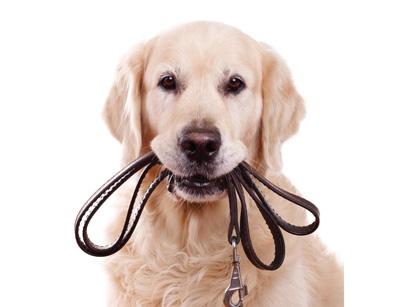 leash-training
